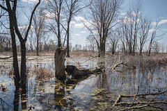 Long exposure at Danada Forest Preserve (tylerjacobs) Tags: sony a6000 sigma 16mm f14 long exposure water stream wetlands moss danada forest preserve lisle illinois naperville nature spring