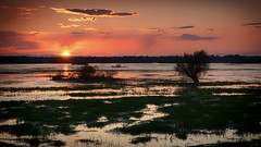 The end of rainy day (pszcz9) Tags: polska poland przyroda nature natura zachódsłońca sunset woda water parknarodowy ujściewarty wartamouthnationalpark wartamouth pejzaż landscape mokradła wetlands beautifulearth sony a77