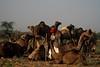 Pushkar Mela (Tito Dalmau) Tags: rabari man camels faire mela pushkar rajasthan
