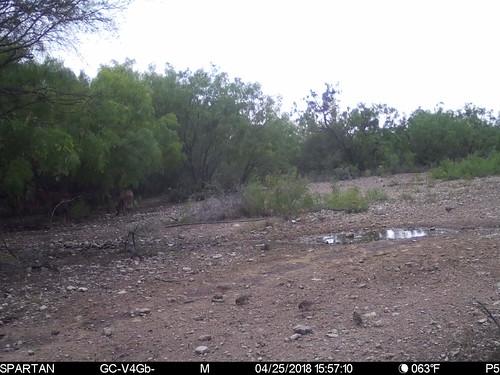 2018-04-25 15:57:10 - Crystal Creek 1