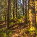 Fort Clatsop Forest