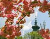 018Apr 24: Church Tower in Bloom (Johan Pipet 2M+ views) Tags: flickr kostol church spring sunny flower bloom blossom kvety tree strom sky tower veža dubravka dúbravka bratislava slovakia slovensko eu europe palo bartos bartoš canon christian catholic