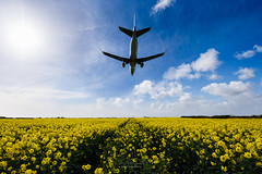 Plane landing over a Rapeseed Field, near Cardiff Airport South Wales