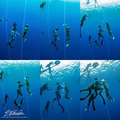 sequence (bodiver) Tags: hawaii honaunau freediving freedivers ambientlight wideangle peopleunderwater blue fins ocean