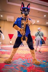 DSC04830 (Kory / Leo Nardo) Tags: biggest little furry convention blfc 2018 blfc18 blfc2018 reno nevada grand sierra resort casino hotel con fursuit fursuiting costume cosplay animal masks mascot pupleo