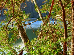 Tranquility by the lake VI (elphweb) Tags: hdr highdynamicrange nsw australia tree trees forest bush woods wood lake lakeside