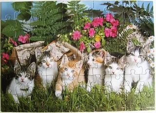 6 Kätzchen in einer Reihe