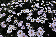 sdqH_180518_B (clavius_tma-1) Tags: sd quattro h sdqh sigma 1224mm f4 dg 1224mmf4dghsm art 新宿 shinjuku 東京 tokyo 新宿中央公園 park flower