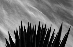 The thorn and the fly (laura-melisande-gross90@web.de) Tags: thorn ibiza plants nature canon black white