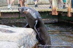 Bristol Zoo (Ashley Middleton Photography) Tags: bristol bristolcounty england