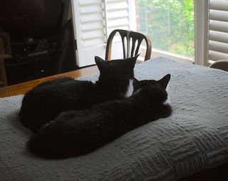 SIDE B (two tuxedo cats)