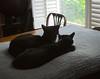 SIDE B (two tuxedo cats) (rootcrop54) Tags: two tuxedo cats idahotop tina frombehind dogbed neko macska kedi 猫 kočka kissa γάτα köttur kucing gatto 고양이 kaķis katė katt katze katzen kot кошка mačka gatos maček kitteh chat ネコ