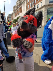 """Leeds furmeet May2018 • <a style=""""font-size:0.8em;"""" href=""""http://www.flickr.com/photos/97271265@N08/41528704054/"""" target=""""_blank"""">View on Flickr</a>"""