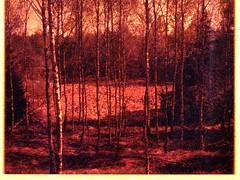 May 2018. Tuchola Pinewoods Part 4. PENTAX AUTO 110 (yerzmyey) Tags: tuchola forest pinewoods woods nature yerzmyey 110 film lobster redscale lomography pentax auto 16mm lofi microfilm pocket low fidelity