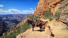 The Grand Canyon (dorameulman) Tags: dorameulman thegrandcanyon arizona 7wondersoftheworld mules hike landscape landscapephotography adventure canyon people animal sky