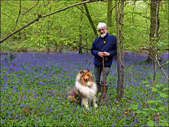 Among the Bluebells (jo92photos) Tags: bluebells flowers scent man dog blue woods nature countryside onemanandhisdog spring uk