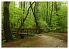 TZ80 (Geziena) Tags: panasonic lumix tz80 test valkenstijn landgoed bos bomen regen groen bruggetje