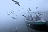 A Journey to Utopia (pallab seth) Tags: varanasi people morning gulls boat river ganga banaras benaras india ganges asia winter fog mist travel
