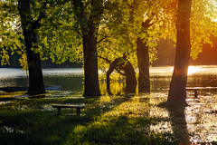 Flood (Pásztor András) Tags: nature water reflection sunset colorful trees forest bench grass green summer spring sky sun light landscape dslr full frame nikon d700 andras pasztor photography 2018 hungary