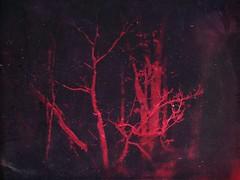 Where the devil hides (BLACK EYED SUZY) Tags: night evil spooky dark trees devil red