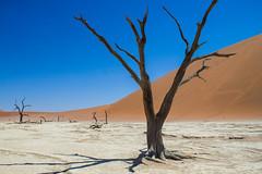 IMG_9926 (tregnier) Tags: namibia roadtrip africa travel desert animals sossusvlei leopard cheetah lion solitaire trip