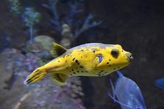 Wonders of Wildlfie National Museum and Aquarium (Adventurer Dustin Holmes) Tags: 2018 wondersofwildlife fish animal animalia tropicalfish aquarium