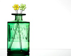 Blossom and Blooms (Karen_Chappell) Tags: green white yellow glass jar bottle vase swizzlestick swizzle stilllife