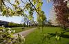 _B5A8700REWS A Tree's Viewpoint, © Jon Perry, 19-4-18 zbj