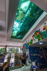 Wien 2017 - Haus des Meeres (karlheinz klingbeil) Tags: crocodile krokodil water wasser tier animal austria aquarium city zoo vienna österreich stadt wien at