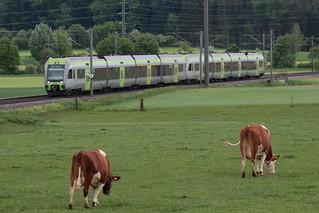 BLS Lötschbergbahn Lötschberger RABe 535 unterwegs zwischen Gümligen und Rubigen im Kanton Bern der Schweiz