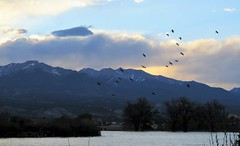 Sundown (Patricia Henschen) Tags: clouds storm sunset lake choppy frantzlake frantz swa statewildlifearea sawatch range mountains mountain salida colorado spring trees wind bird birds shorebirds whitefacedibis ibis