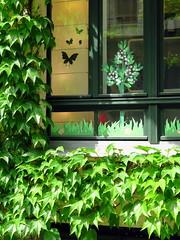 Les papillons... (LILI 296...) Tags: fenêtre berlin allemagne europe papillon canonpowershotg7x