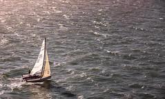 San Francisco Bay Sail (++ Martin ++) Tags: canon san francisco bay california kalifornien usa alcatraz island water pacific ocean sailing boat sail evening westcoast westküste waves wellen efs 1785mm f456 is usm
