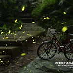 仲夏之夜,螢火蟲,腳踏車,台灣,新北市,土城 thumbnail