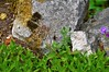 DSC_0188 (bratispixl) Tags: fotosafari oberbayern germany bratispixl tele lichtwechsel schärfentiefe fokussierung bergwelt spot outdoor indoor architektur landschaft grat hügel wasser sonnenfotografie see flus tiere insekten nature nigth day spuren blumen wolken video chiemsee windspuren atemluft working