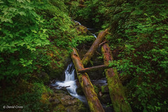 Quinault Rain Forest Vignette (buffdawgus) Tags: northwest olympicnationalpark quinault washington pacificnorthwest topazsw canon5dmarkiii lightrooom6 canonef24105mmf4lisusm quinaultrainforest landscape olympicnationalforest graysharborcounty cascadefallstrail rainforest