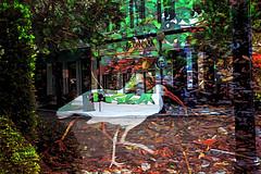 Be On Park (Karen Kleis) Tags: digitalart photomanipulation bird birdart awardtree