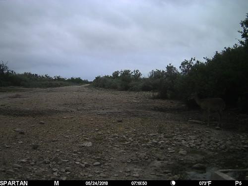 2018-05-24 07:19:50 - Crystal Creek 2