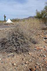 DSC01575 (Kate Hedin) Tags: frank lloyd wright flw taliensin west desert tour cactus plant architecture apprentice cottage land mountains hills terrain