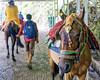 Jai Mata Di Trip ... (Bijanfotografy) Tags: nikon nikond500 nikondx nikon24mm28af katra jammukashmir jammu jaimataditrip india pilgrimage horse horseride people walk