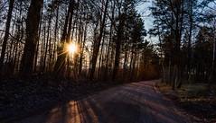Forest Sun (free3yourmind) Tags: forest sun star woods road trees braslaw braslav belarus nature