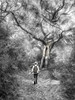 Just Annie and her Welcoming Tree on her Birthday Bush Walk (caralan393) Tags: bw art artistic annie enchanted mystic nik