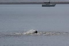 IMG_6315 (armadil) Tags: mavericks beach beaches californiabeaches kathie lowtide seal seals