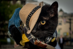 Cat with hat (Ms Lowlands) Tags: cat kat pet dier huisdier zwart black animal hat