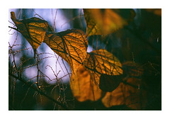 Forest Light - Kodak Gold 100 (magnus.joensson) Tags: sweden swedish skåne forest wood contax aria zeiss sonnar 100mm kodak gold 100 exp ppa5115 anderslöv c41 handheld