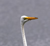 05-14-18-0017484 (Lake Worth) Tags: animal animals bird birds birdwatcher everglades southflorida feathers florida nature outdoor outdoors waterbirds wetlands wildlife wings