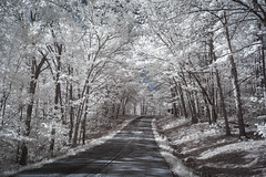 Tree Lined Road Infrared (Notley Hawkins) Tags: httpwwwnotleyhawkinscom notleyhawkinsphotography notley notleyhawkins 10thavenue spring landscape 2018 may tree trees woods wood forest ozarks ozarkplateau ozark marktwainnationalforest outdoors ir infrared forestcanopy canopy greenery road countryroad shannoncountymissouri