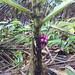 Jungle (Bako National Park)