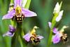 smiley (BigZoic) Tags: macro canon eos 60d tamron 90 mm nature flower smile removedfromstrobistpool nostrobistinfo seerule2