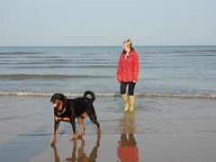 Floki (deltrems) Tags: pet dog beach sand irish sea blackpool lancashire fylde coast floki rottie rottweiller